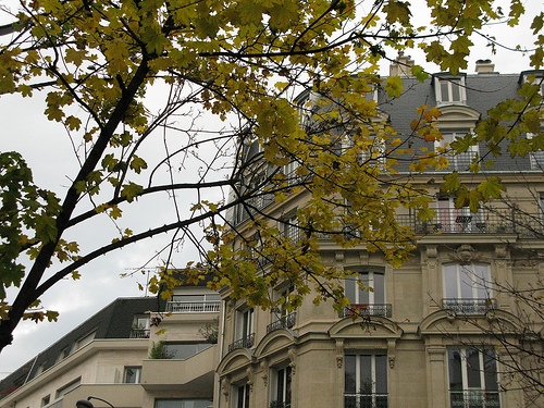 Paris-Autumn-5-500